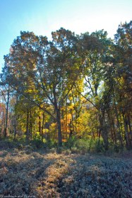 06fall_color