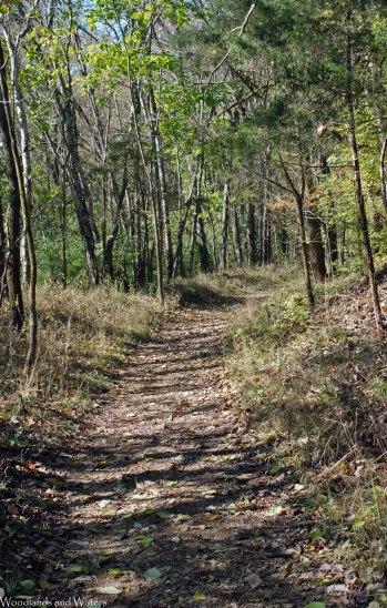 39lake_trail_footbed