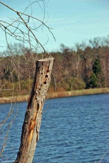 49woodpecker_nests