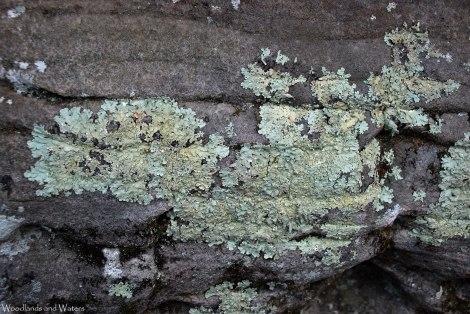 02wall_lichen
