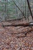 10fallen_trees