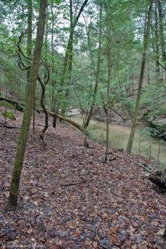 17footbed_along_creek