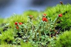 31southern_soldiers_lichen